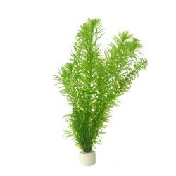 EGERIA DENSA BUNCH SUNGROW
