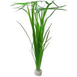 VALLISNERIA GIGANTEA BUNCH SUNGROW