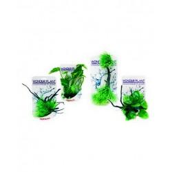 PIANTA FINTA WONDER PLANT G20-25 CM.