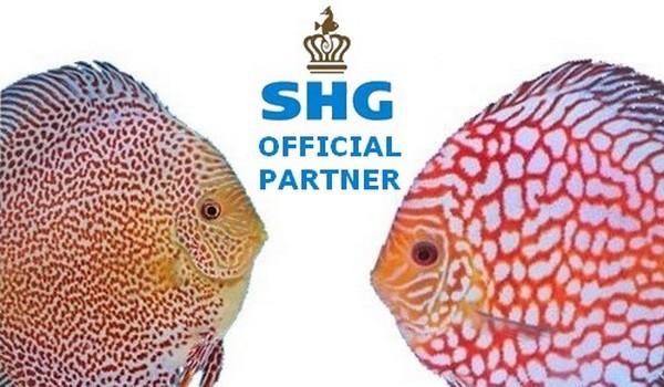 SHG Partner